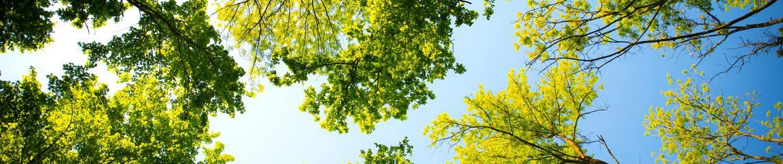 Daylight forest nature park 589802